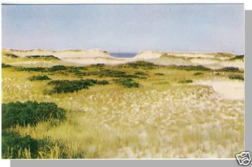 Beautiful CAPE COD, MASS/MA POSTCARD, Sand Dunes