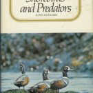 SHOREBIRDS AND PREDATORS By John Rodgers