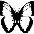 butrfly015