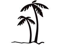 palm005