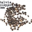 750 -SALVIA HISPANICA seeds- CHIA Sage seeds- aromatic