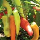 100 HUNGARIAN HOT WAX PEPPER seeds Capsicum Annum
