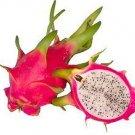 20 DRAGON FRUIT seeds Hylocereus Undatus -Red Pitaya