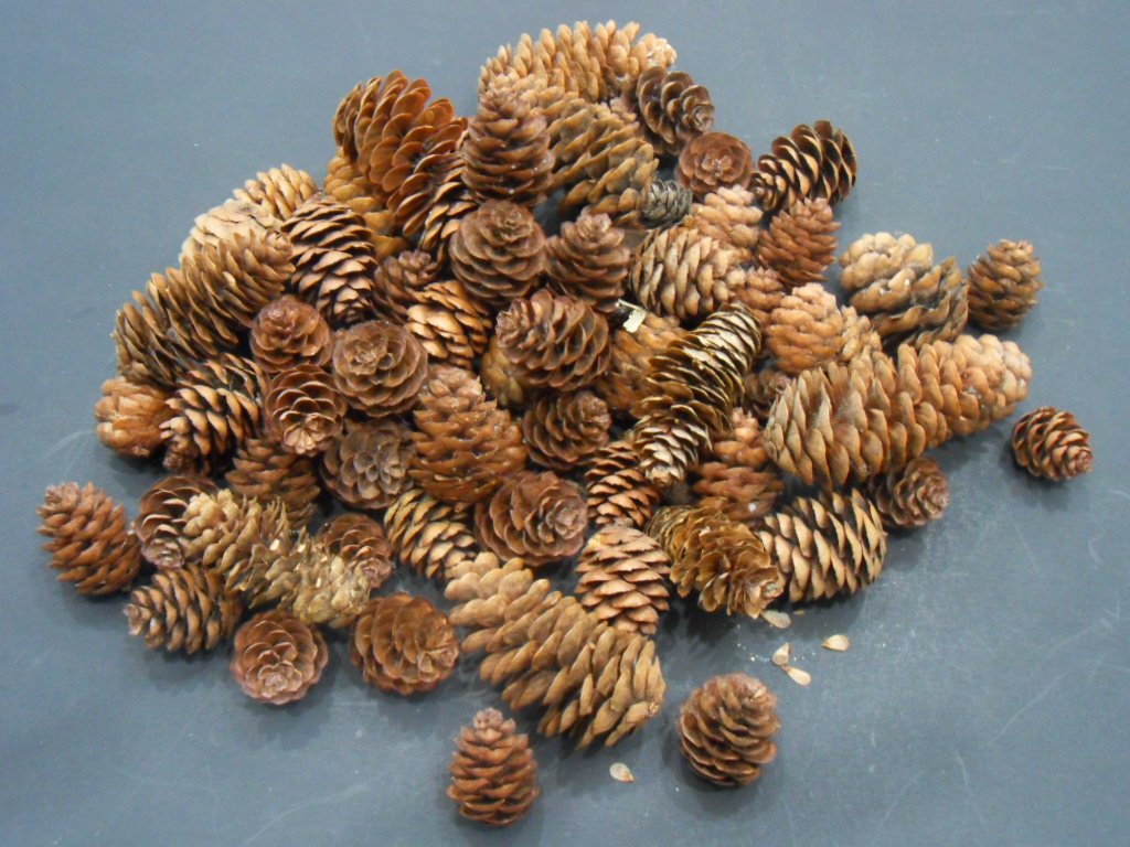 75g mini pine cones small sized cone assortment