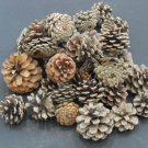 1/2 Lb. LONG ISLAND PITCH PINE CONES- ornamental cone