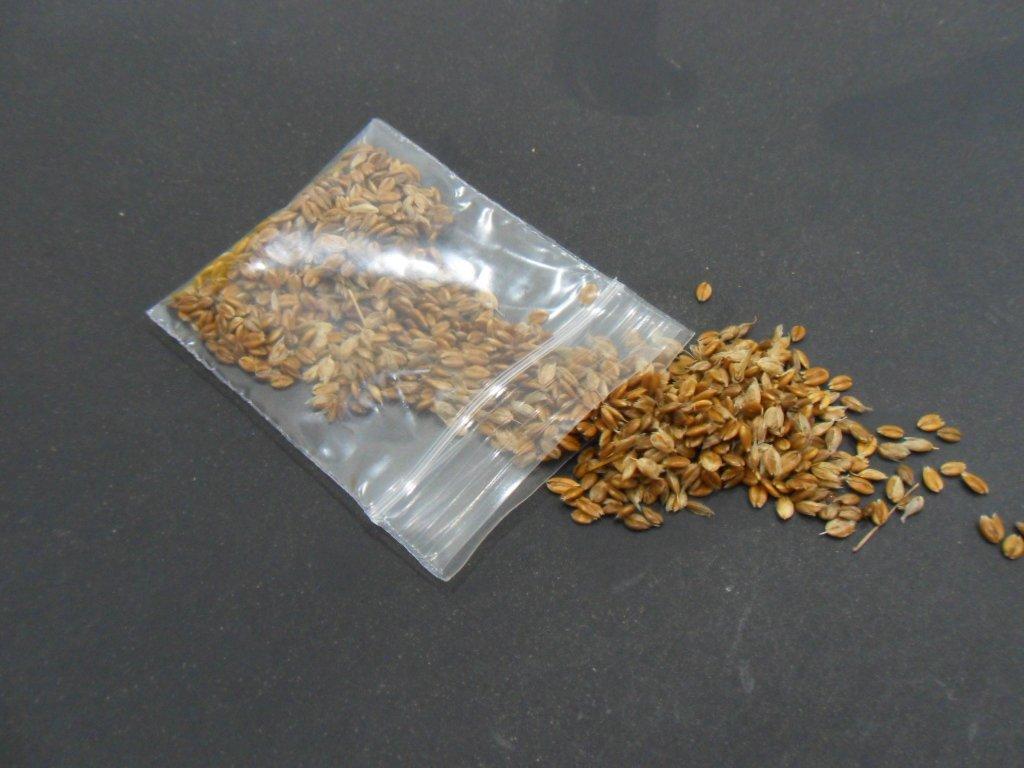 100 SWEET GRASS SEEDS- Heirochloe Odorata SACRED Plant