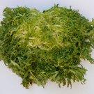 700 CURLY ENDIVE chicorium endiva Seeds - Heirloom Mesclun Salad Green- Chicory