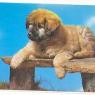 SWEET PUPPY ON WOODEN BENCH, VINTAGE CHROME Vintage  POSTCARD   55
