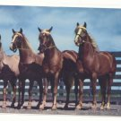 A STRING OF THOROUGHBREDS, HORSES VINTAGE POSTCARD   133