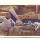 BEARS, BROOKFIELD ZOO, CHICAGO, ILLINOIS POLAR BEARS   POSTCARD #252