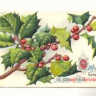 MAY YOU HAVE A MERRY CHRISTMAS, LARGE HOLLY BRANCH  POSTCARD #264