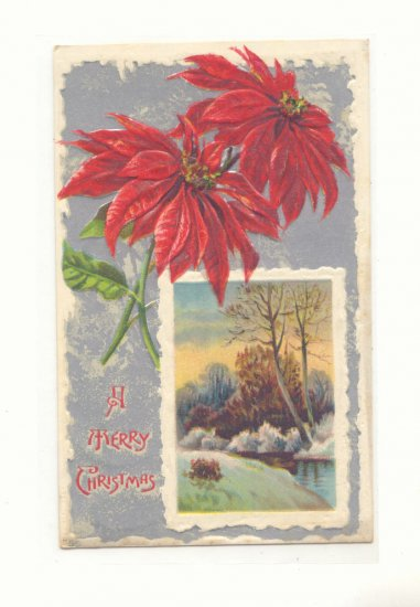 1911 POINSETTIA SILVER WINTER SCENE CHRISTMAS POSTCARD    #343