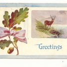 GREETINGS, STAG AT WATER, ACORN ON OAK BRANCH POSTCARD   #415