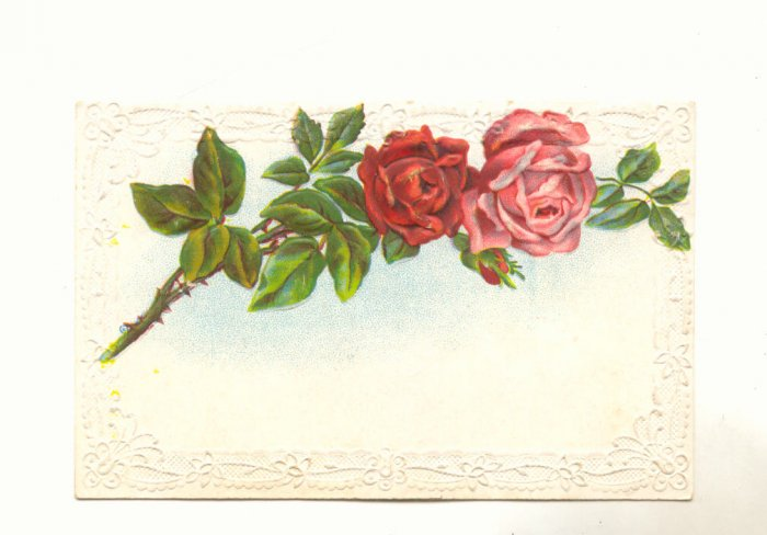 Pretty Pink and Red Roses, Vintage Flower Postcard #535