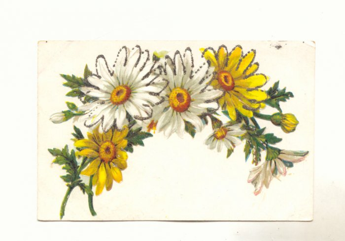 Large Daisies outlined in Glitter, Vintage Postcard, #536