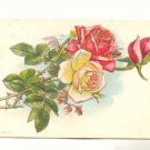 Pretty Pink and Cream Roses, Vintage 1910 Postcard #537