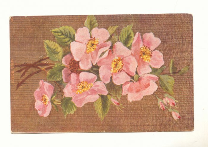 WILD ROSES Bouquet of Pink Roses Vintage Postcard #551