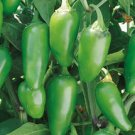 Organic Early Jalapeno Pepper 25 Seeds