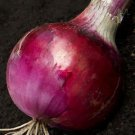 Organic Red Grano Onion Seeds 25 Count