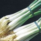 Organic Parade Bunching Onion Seeds 25 Count