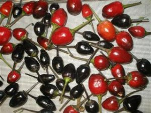 Organic Peruvian Purple Pequin Pepper Seeds 25 Count