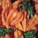 Organic Fatali Pepper Seeds 25 Count