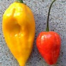 Organic Bishops Hat Pepper Seeds 25 Count