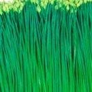 Organic Flowering Chinese Leek Seeds 25 Counts