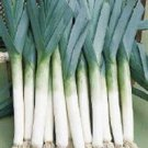 Organic Lancelot Leek Seeds 25 Count