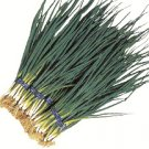 Organic Hiro Haba Leek Seeds 25 Count