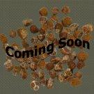 Organic Startrack Leek Seeds 25 Count