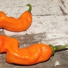Organic Peter Pepper, Orange Seeds 25 Count