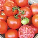 Organic Earliana Tomato Seeds 15 Count