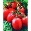 Organic Window Box Red Tomato Seeds 15 Count