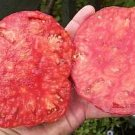 Organic Soldacki Tomato Seeds 15 Count