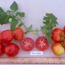 Organic Swiss Alpine Tomato Seeds 20 Count