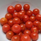 Organic Super Sioux Tomato Seeds 20 Count