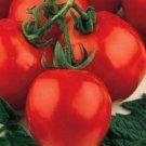 Organic Stupice Tomato Seeds 15 Count