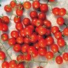 Organic Mexico Midget Tomato Seeds 20 Count
