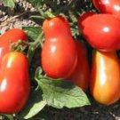 Organic Martinos Roma Tomato Seeds 10 Count