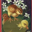 EASTER CHICKS CHICK COMING OUT OF EGG  JAEGER POSTCARD