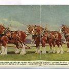 BUDWEISER EIGHT HORSE HITCH ST LOUIS MO  LONG POSTCARD