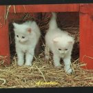 WHITE KITTENS CATS IN STRAW  ADVENTURE POSTCARD