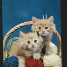 CATS KITTENS IN BASKET WITH YARN BALLS NEEDLES POSTCARD
