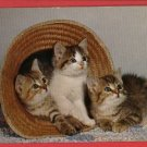 3 CATS KITTENS IN STRAW HAT KITTEN  POSTCARD