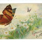 BUTTERFLY BUTTERFLIES GREETINGS DAISIES  POSTCARD