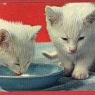 WHITE KITTENS BOWL OF MILK KITTEN CAT CATS POSTCARD