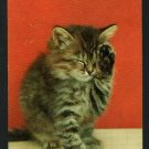 LONG HAIRED KITTEN WIPING EYE  POSTCARD
