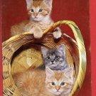 KITTENS PLAYING IN BASKET  KITTEN CAT CATS POSTCARD