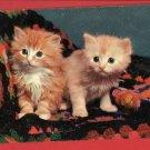 2 CATS KITTENS ON CROCHETED AFGHAN KITTEN  POSTCARD